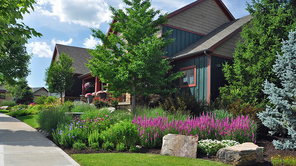 Residential landscape design with purple and blue flowers and shrubs.