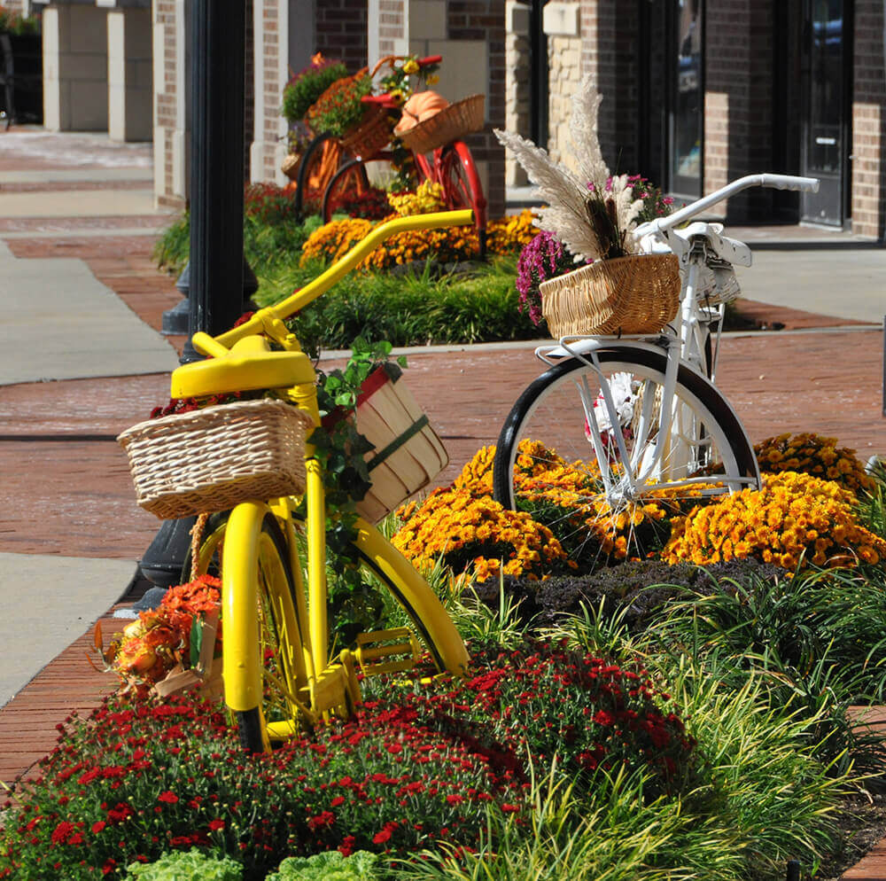 Yellow and red chrysanthemums with two bicycles.