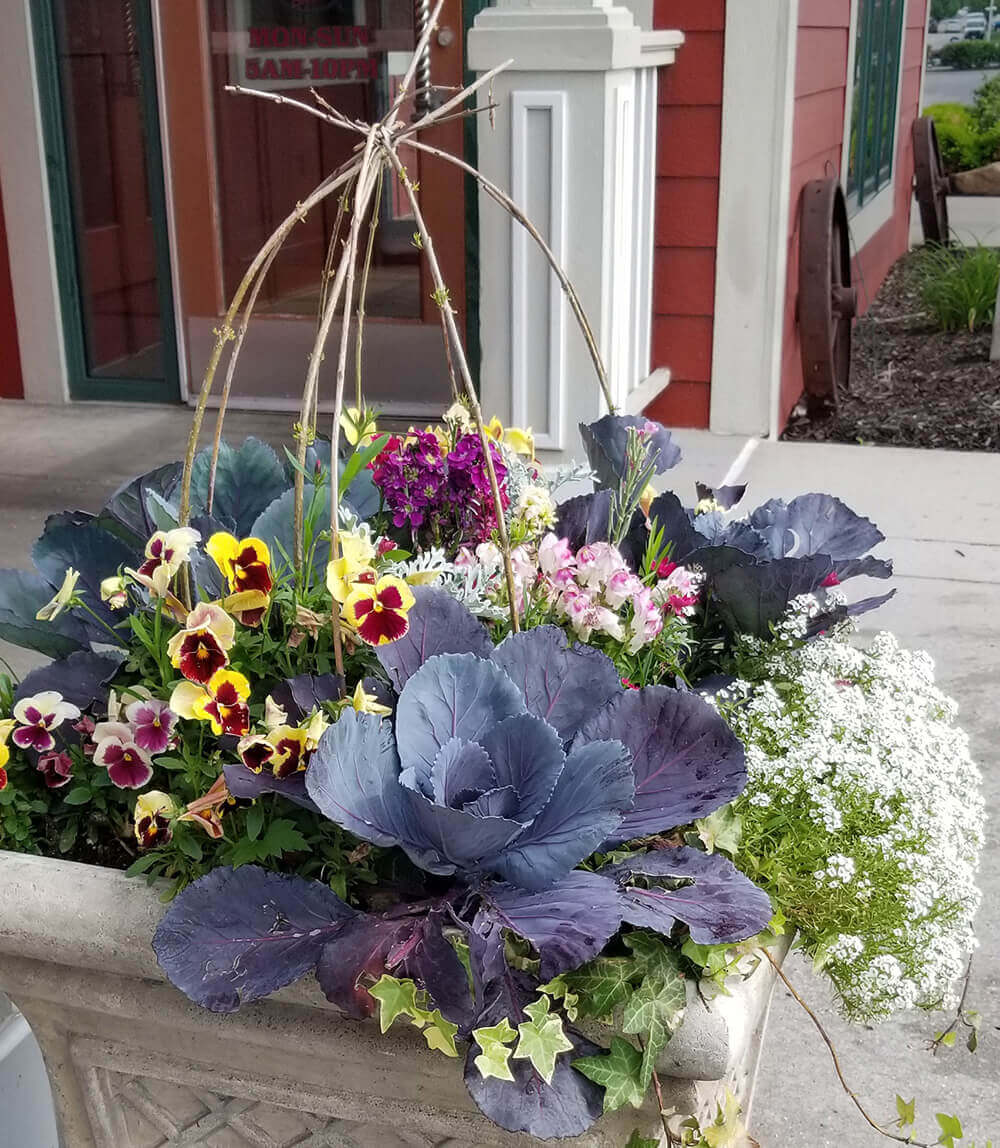 Colorful seasonal flowers for spring.