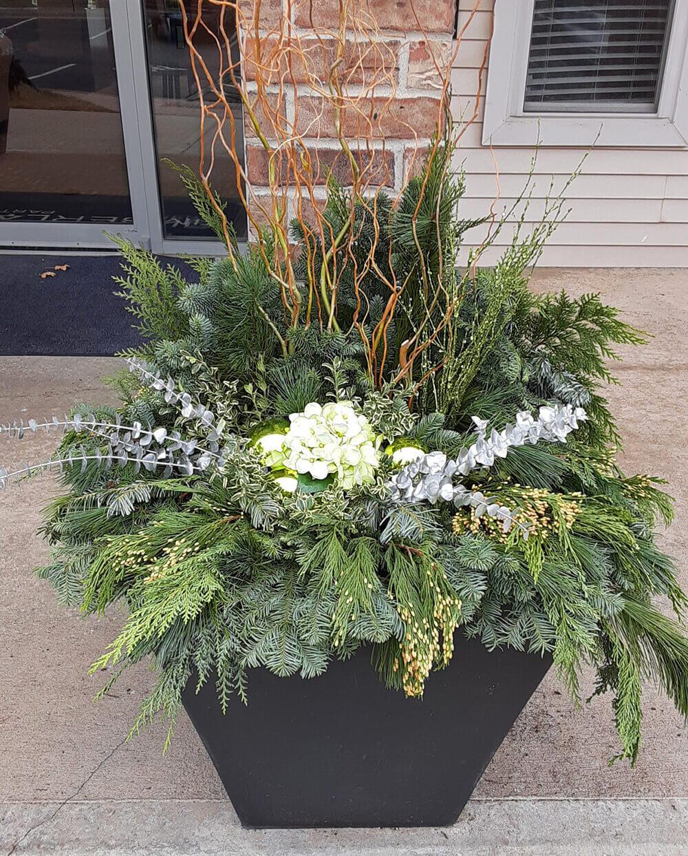 Seasonal flowers for winter.