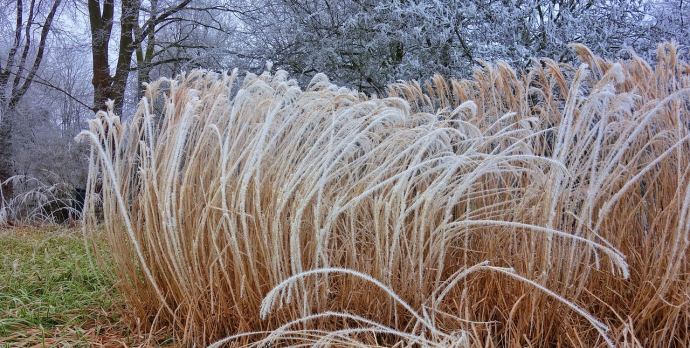 Winter is an enigma for new gardeners; what needs to be done and what needs to be left until spring?