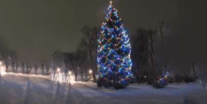 To help you in your quest for the perfect Christmas tree, we've put together a short slide show featuring some of this year's options.