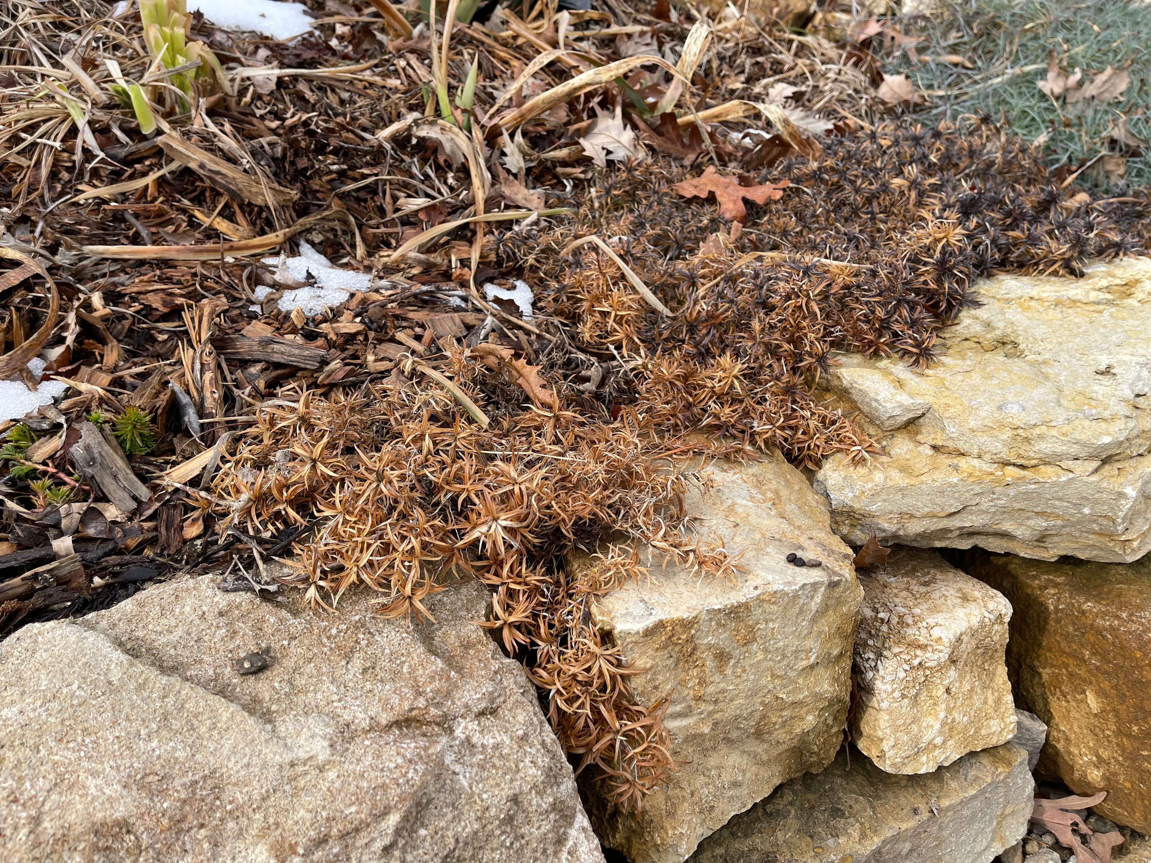 dead bush