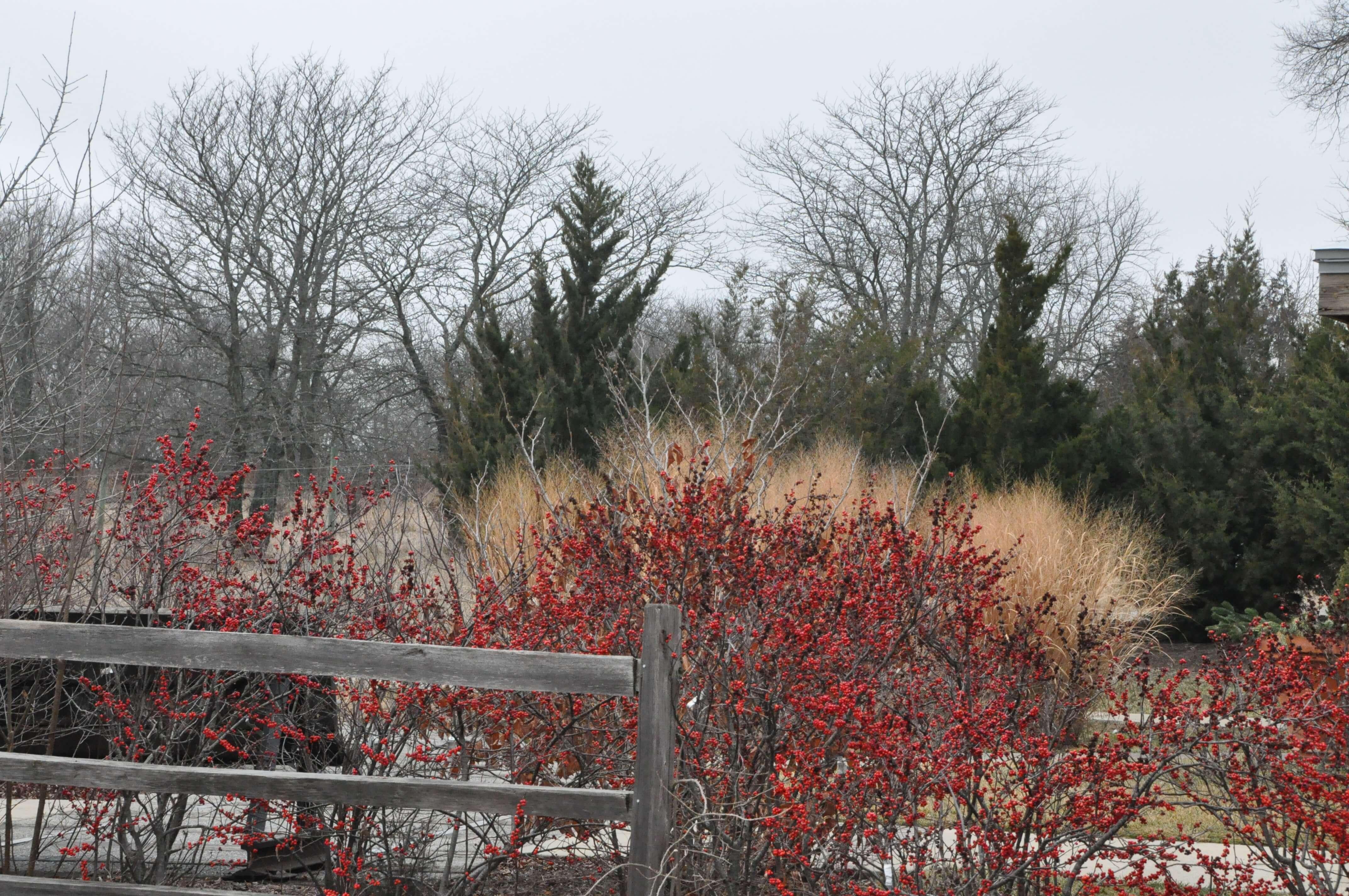 pop of color in winter garden