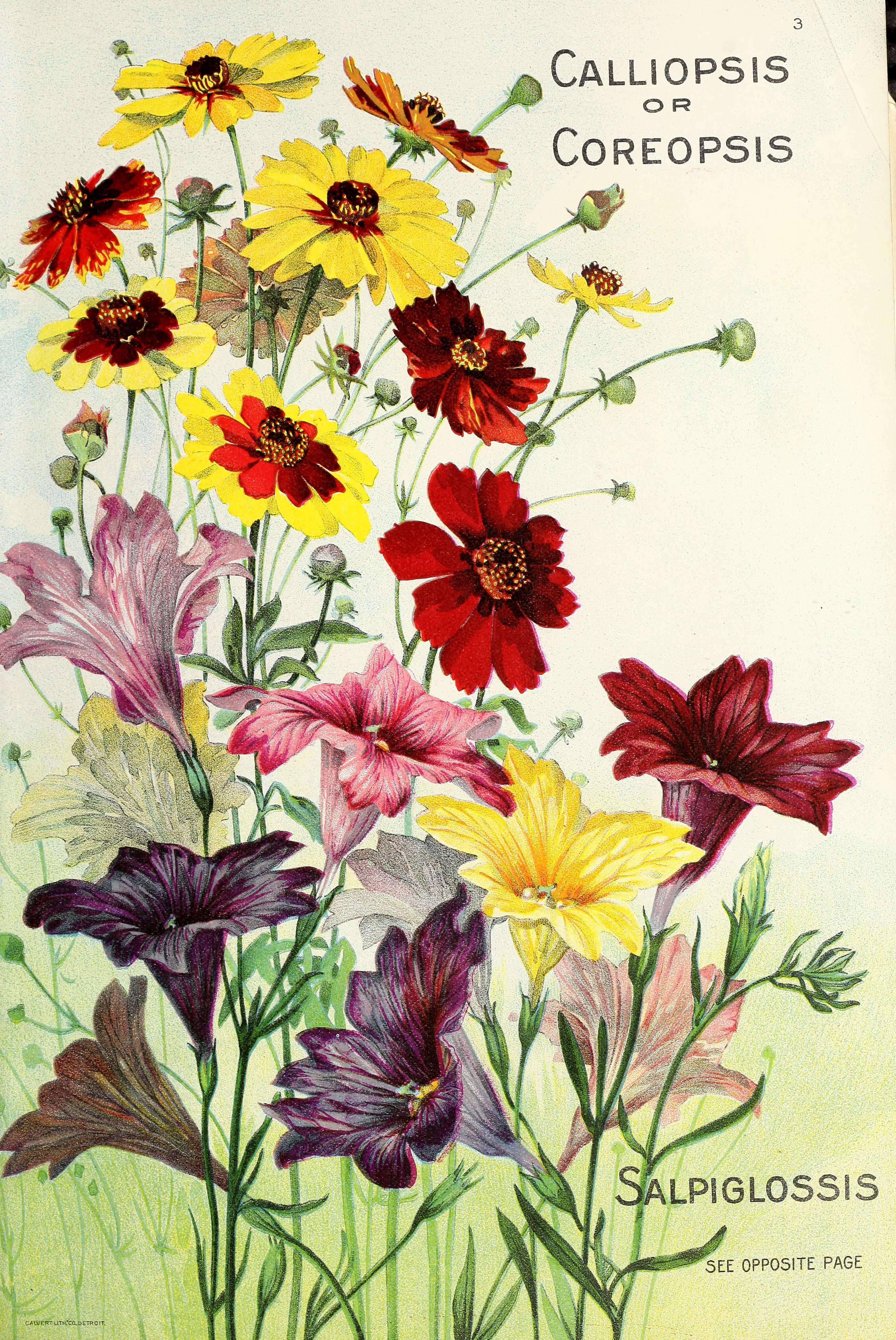 seed packets vintage