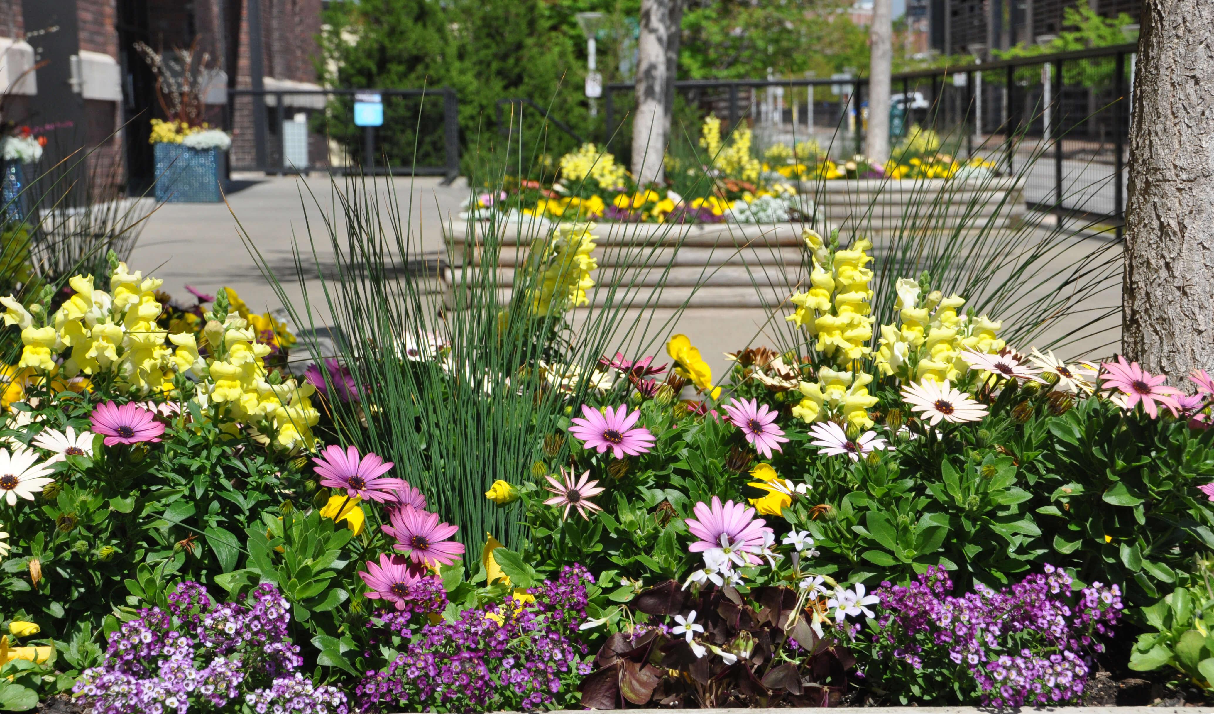 spring planting by Jo Ann