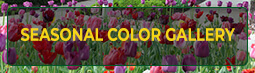 Seasonal Color Gallery