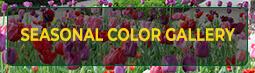 Seasonal Color Gallery